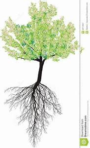 Baum Mit H : bl hender kirschbaum mit wurzeln vektor abbildung bild 42114557 ~ A.2002-acura-tl-radio.info Haus und Dekorationen