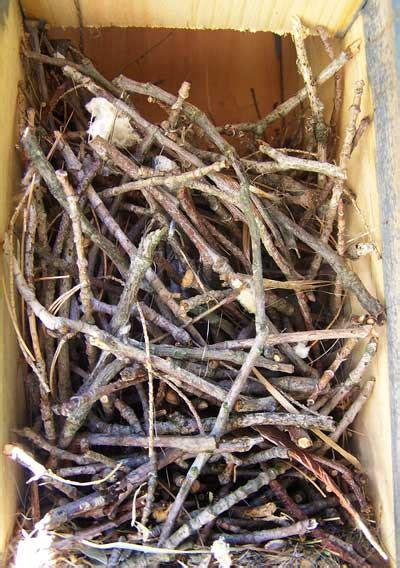 house wren nest eggs  young identification