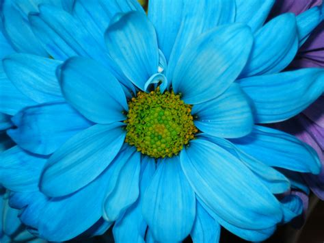 Flowers, Flowers Wallpapers, Flower  Picture's World
