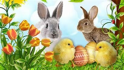 Easter Desktop Happy Bunny Spring Wallpapers Bunnies
