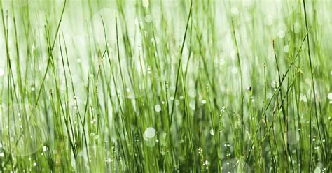 how many kinds of grass are there types of marsh grass ehow uk