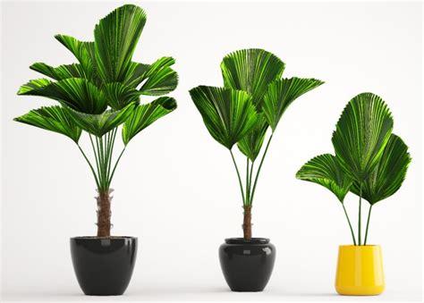Große Zimmerpflanzen Günstig by Zimmerpflanze Mit Grossen Runden Blattern