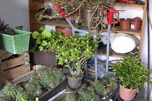 Hortensien überwintern Im Keller : hortensien im keller berwintern so machen sie 39 s richtig ~ Lizthompson.info Haus und Dekorationen