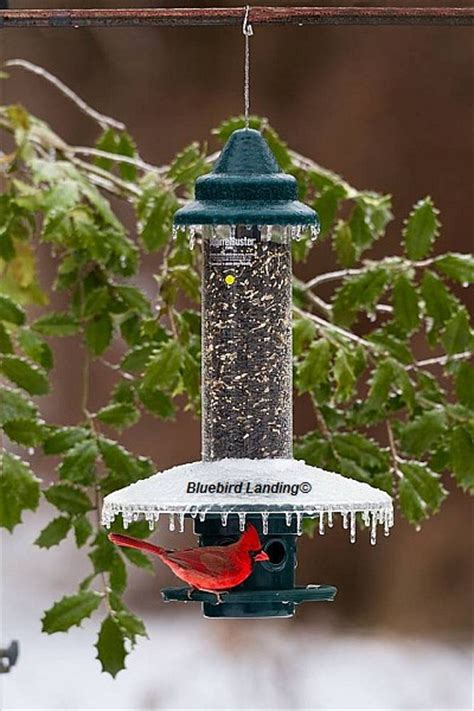 brome squirrel buster plus bird feeder with weather guard