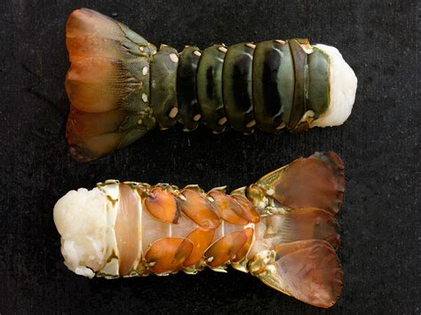 The sweet, creamy white meat of the western australian lobster is praised by chefs and featured in gourmet restaurants world wide. Lobster Tails — MARKFOODS
