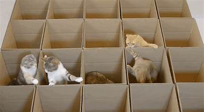 Cat Box Cardboard Cats Boxes Maze Things