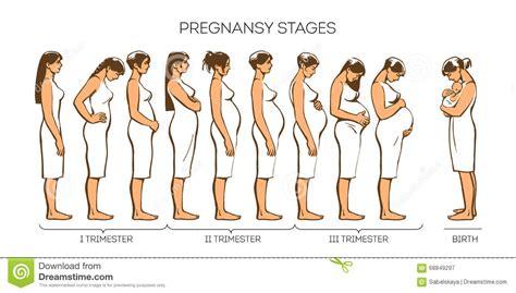fasi  gravidanza delle donne illustrazione vettoriale