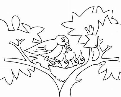 Birds Coloring Pages Printable Bird Animals Categories