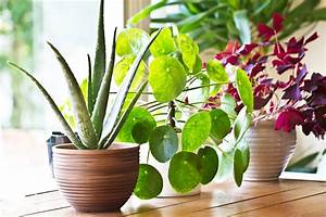 Houseplants, Need, Bright, Indirect, Light, And, Light, Watering