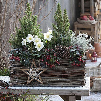 Blumenkübel Weihnachtlich Dekorieren by Die Besten 25 Christrose Ideen Auf Winter