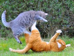 fighting cat exclusively cats veterinary hospital why are my cats