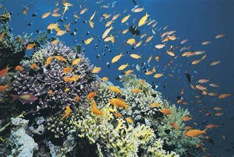 10 vienkārši fakti par Okeānu - Spoki