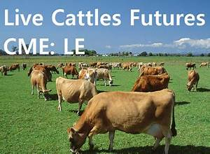 Cme Le Live Cattle Futures Prices Long Term Forecast And