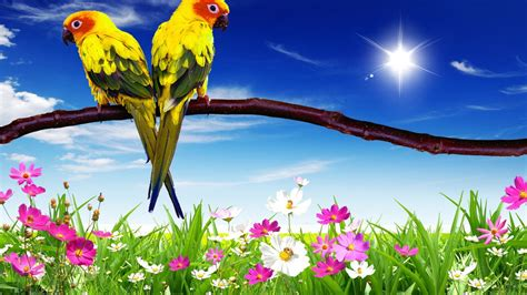 Parrots Pair Hd Desktop Background For Mobile Phone And