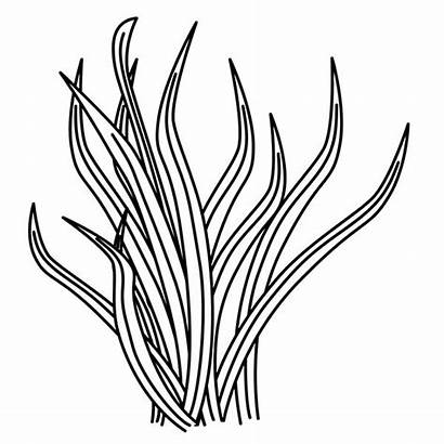 Grass Plants Coloring Drawing Pages Ocean Outline