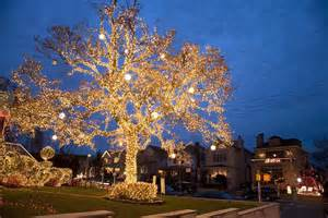 tree lights how to wrap trees with outdoor lights