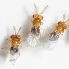 Larve Mite Alimentaire : produits de lutte biologique contre les insectes ravageurs ~ Nature-et-papiers.com Idées de Décoration