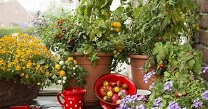 Pferdemist Für Tomaten : 5 tipps f r tomaten im topf mein sch ner garten ~ Watch28wear.com Haus und Dekorationen