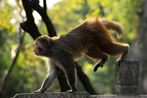 Animals Gone Wild  National Geographic For Everyone In
