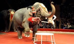russian circus elephants saved  dying   siberian