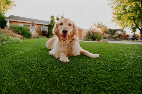 Why Artificial Grass For Dogs And Kids?  Eco Lawn. Breakfast Nook With Storage. Habitat For Humanity Pasadena. Gault Westport Ct. Gray Green Paint. German Kitchen. Best Front Doors. White Painted Brick Fireplace. Winter Carnival Laminate