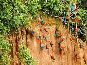 Tour Collpa De Guacamayos Chuncho - Tambopata