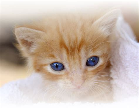 declawing cats declawed cat images