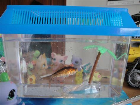 l histoire de mes poissons rouges