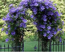 Do Climbing Plants Damage Walls – Laidback Gardener