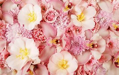Pink Orchids Wallpapers Orchid Background Desktop Flower