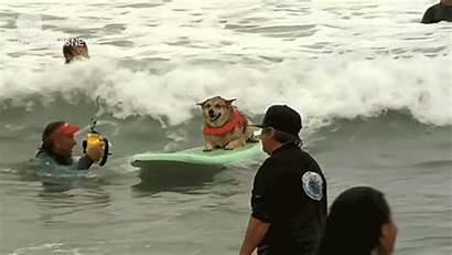 Surfing Dog Dogs Championships Surf