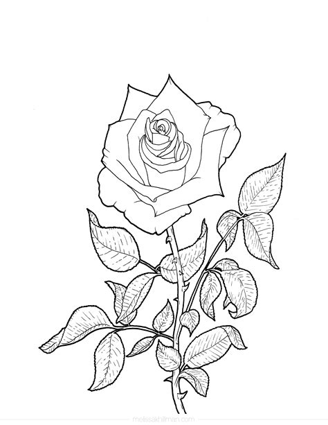 """Coloring such illustrations is not only pleasant, but also useful. """"Rose"""" Coloring Page"""