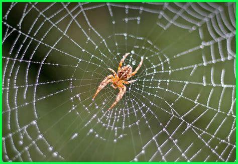 Lengkap! Contoh Hewan Vertebrata dan Invertebrata - Dunia ...
