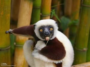 Gallery | Help Madagascar.  Animal