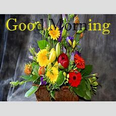 New Good Morning Wishes Photos Collection  Festival Chaska