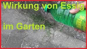 Unkrautbekämpfung Mit Essig : so wirkt essig im garten auf unkraut das passiert wenn du ~ A.2002-acura-tl-radio.info Haus und Dekorationen