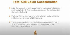 Watch  Here U0026 39 S A Beginner U0026 39 S Guide To Yeast Cell Counting In