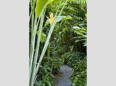 Tropical Garden Retreat Yards and Tropical garden