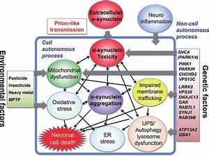 Schematic Presentation Of Neuronal Death In Parkinson U0026 39 S Disease  In