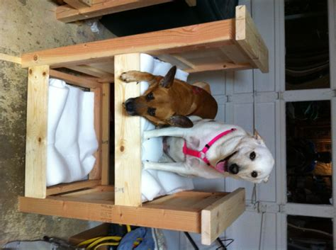 ana white doggy bunk bed diy projects