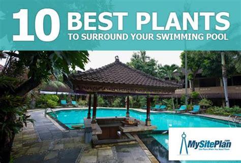 best plants around swimming pool news my site plan