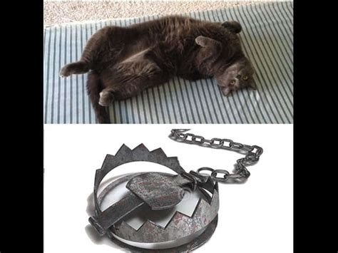 Cat Trap Meme - 20 hilarious memes and photos about the hazards of cat ownership page 4 of 5