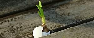 Quoi Planter En Automne : semer en automne les vari t s de l gumes a cultiver en ~ Melissatoandfro.com Idées de Décoration