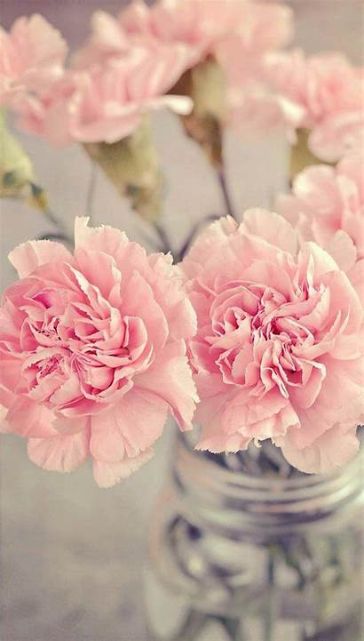 Flower Flowers Floral Wallpapers Iphone Carnations Getgadgetgoodies
