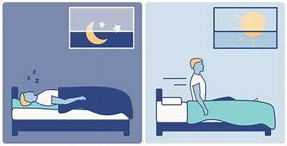 Rhythm Circadian Sleep Wake Cycle Brain Cycles