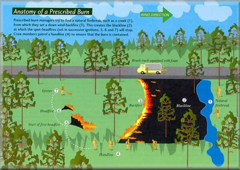 Anatomy Of A Prescribed Fire