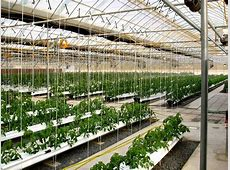 Greenhouse Nursery Supplies Professional Commercial