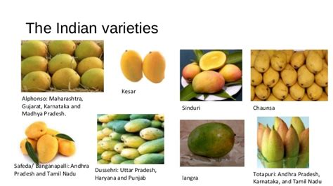10 Popular Varieties Of Manoes In India