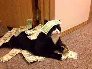 money cat cats part 90 40 pics 10 gifs amazing creatures