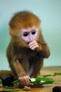 Cute Baby Monkeys | The 21 Most Adorable and Cute Baby ...